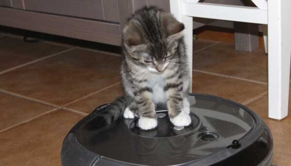 aspirador para mascotas